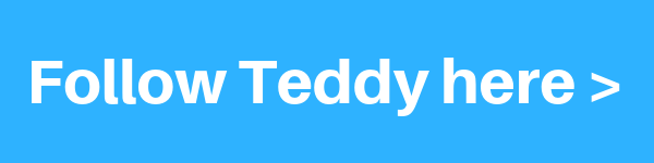 follow-teddy-bear-xxx